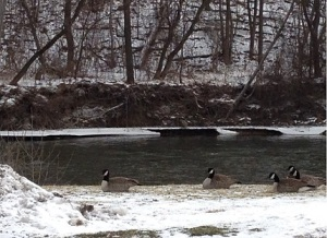 The Flint River flows behind my subdivision in Flint Township. It's pretty much in my backyard.